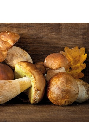 Funghi porcini essiccati
